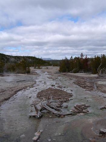 Norris_geyser_area_yellowstone_1
