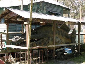 The_amazing_bassigator